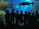 Berbazulo_2009_Aquarium_14.jpg